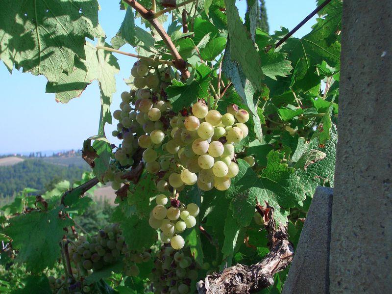 vino2.JPEG